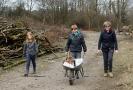 Obstbaum-Verjüngung