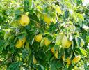 SAP-Mitarbeiter und viele Schüler basteln, ernten und pflanzen_8