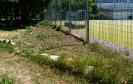 Wässern Pflegen und Gestalten im Schulgarten_14