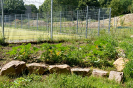 Wässern Pflegen und Gestalten im Schulgarten_54